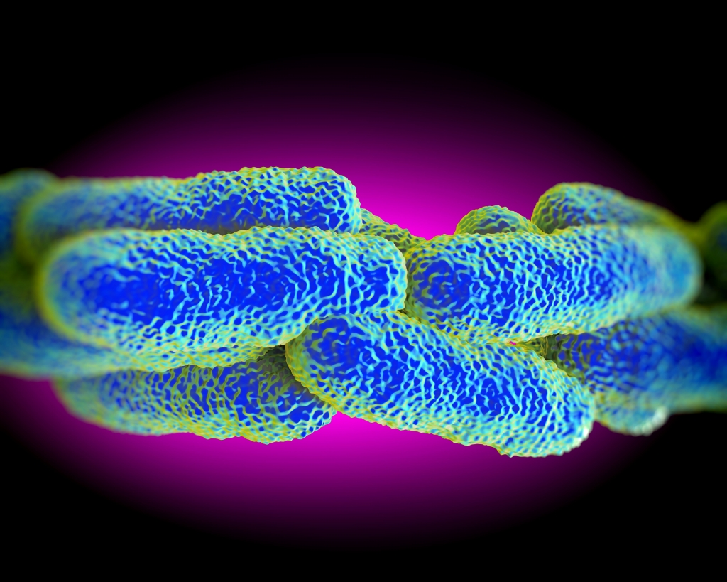 Legionella Pneumophila Bacteria, artwork rendered image in 3d